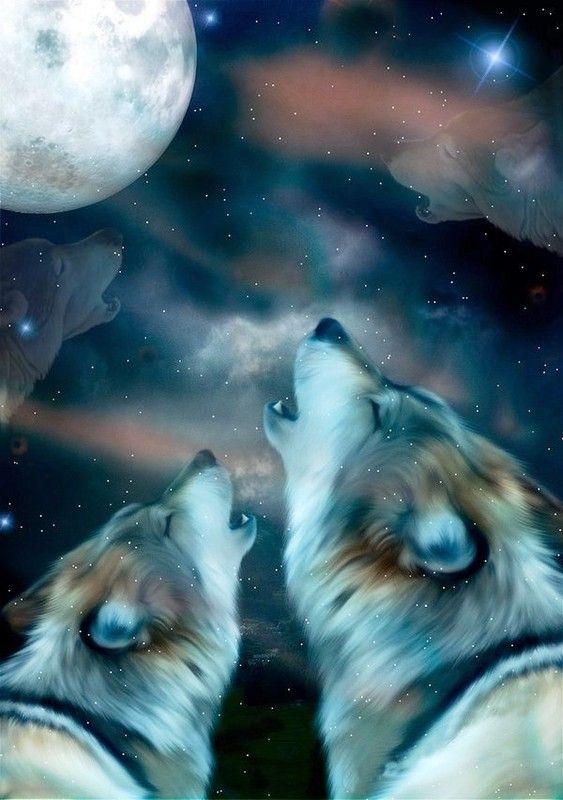 Loups Qui Hurlent A La Lune 3d
